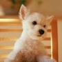 Гарна автрака из категории Собаки #3180