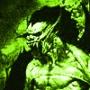 Крута картинка для аватарки из категории Вампіри #3302
