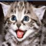 Прикольна ава из категории Коти та кішки #3429