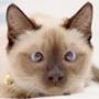 Безкоштовна картинка для аватарки из категории Коти та кішки #3431