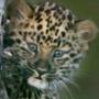 Прикольна картинка для аватарки из категории Коти та кішки #3438