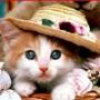 Крутая автрака из категории Коты и кошки #3439