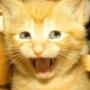 Крута картинка для аватарки из категории Коти та кішки #3443