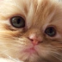 Прикольна ава из категории Коти та кішки #3447