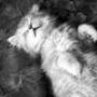 Бесплатная ава из категории Коты и кошки #3449