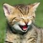Безкоштовна ава из категории Коти та кішки #3451