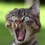 Бесплатная автрака из категории Коты и кошки #3453