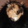Прикольная ава из категории Коты и кошки #3456