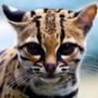 Оригінальна автрака из категории Коти та кішки #3457