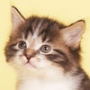 Прикольная ава из категории Коты и кошки #3458