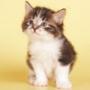 Гарна ава из категории Коти та кішки #3459