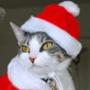 Гарна картинка для аватарки из категории Коти та кішки #3461