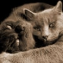 Прикольна картинка для аватарки из категории Коти та кішки #3462