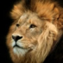 Гарна картинка для аватарки из категории Коти та кішки #3464