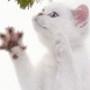 Гарна ава из категории Коти та кішки #3465