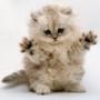 Крута картинка для аватарки из категории Коти та кішки #3466