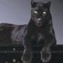 Гарна картинка для аватарки из категории Коти та кішки #3472