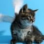 Оригінальна картинка для аватарки из категории Коти та кішки #3476