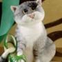 Прикольна картинка для аватарки из категории Коти та кішки #3477