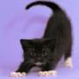 Крутая автрака из категории Коты и кошки #3479