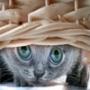 Красивая картинка для аватарки из категории Коты и кошки #3480