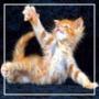 Безкоштовна ава из категории Коти та кішки #3481