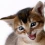 Оригінальна картинка для аватарки из категории Коти та кішки #3482