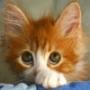 Оригінальна картинка для аватарки из категории Коти та кішки #3483