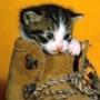 Крута картинка для аватарки из категории Коти та кішки #3485