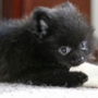 Прикольна автрака из категории Коти та кішки #3486