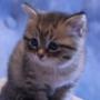 Оригінальна ава из категории Коти та кішки #3493