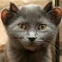 Безкоштовна автрака из категории Коти та кішки #3494