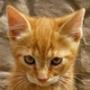 Безкоштовна автрака из категории Коти та кішки #3495
