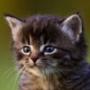 Крута ава из категории Коти та кішки #3496