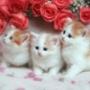Безкоштовна автрака из категории Коти та кішки #3498