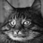 Прикольна автрака из категории Коти та кішки #3502