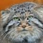 Безкоштовна картинка для аватарки из категории Коти та кішки #3505