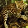Прикольна ава из категории Коти та кішки #3509