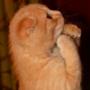 Крута картинка для аватарки из категории Коти та кішки #3511