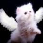 Оригінальна ава из категории Коти та кішки #3514