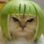 Оригинальная ава из категории Коты и кошки #3517