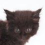 Красивая картинка для аватарки из категории Коты и кошки #3520