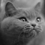 Гарна автрака из категории Коти та кішки #3521