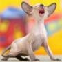 Безкоштовна автрака из категории Коти та кішки #3530