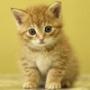 Красивая автрака из категории Коты и кошки #3531