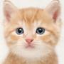 Красивая ава из категории Коты и кошки #3532