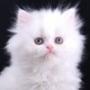 Оригінальна ава из категории Коти та кішки #3533