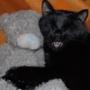Гарна картинка для аватарки из категории Коти та кішки #3535
