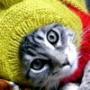 Безкоштовна картинка для аватарки из категории Коти та кішки #3537