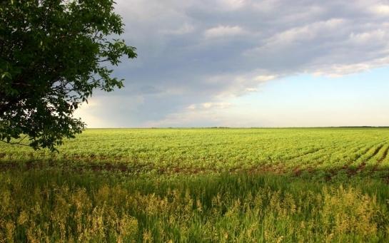 Рынок земли: есть простой секрет успеха для Украины